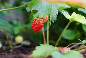der Erdbeermoment