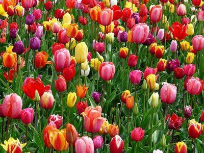 Blumen am Wegesrand sind ein kleines Wunder