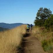 El Camino – der Sternenweg