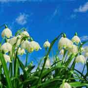 Lass dich von Frühling zum Lebenskünstler machen