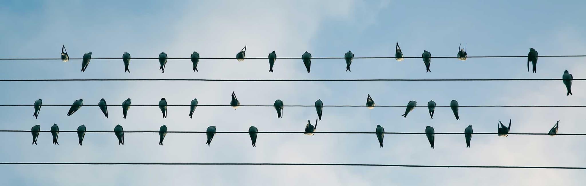 feedback experiment mit Affirmationen