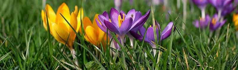 Schöne Dinge im Frühling